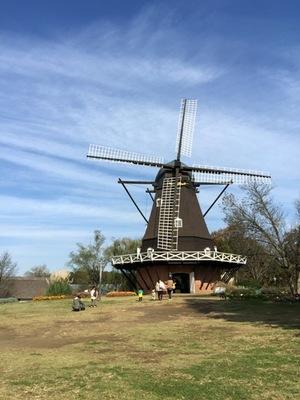 2014-11-16_windmill.jpg