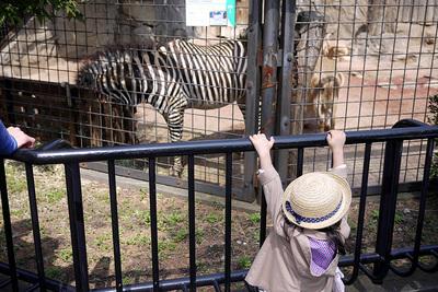 20150322-ueno-zebra.JPG