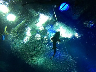 aquarium1.jpg