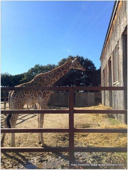 giraph-2016-12-30 12 13 44.jpg